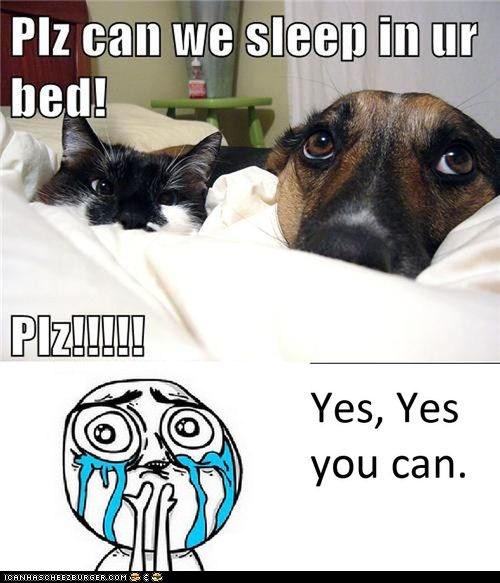 beds,can we,Cats,cuteness overload,dogs,Memes,sleeping,yes