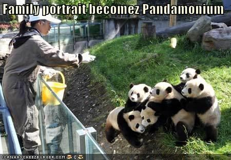 family panda zoo - 621059840