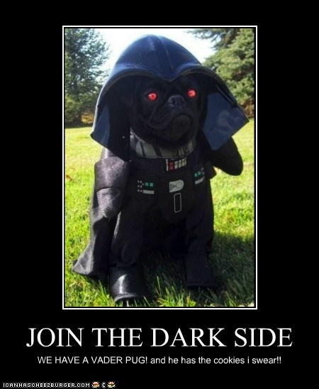 JOIN THE DARK SIDE WE HAVE A VADER PUG! and he has the cookies i swear!!