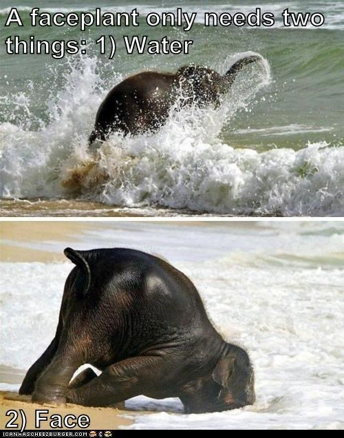 beach,elephant,faceplant,ocean,sand,water,waves