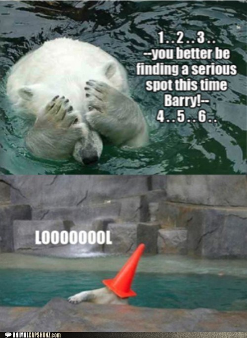 counting,hide and seek,lol,polar bears,silly,traffic cone