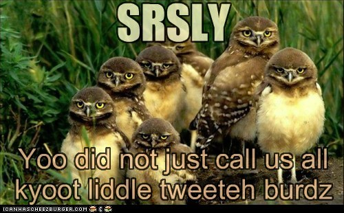 angry are you kidding me birds cute disbelief offence tweety - 6212195584