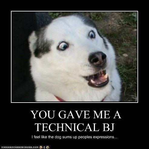 YOU GAVE ME A TECHNICAL BJ I feel like the dog sums up peoples expressions...