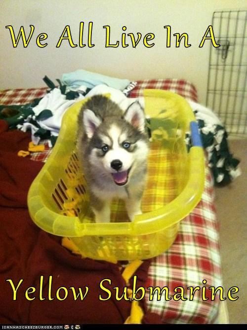 huskie laundry puppy the Beatles - 6212769280