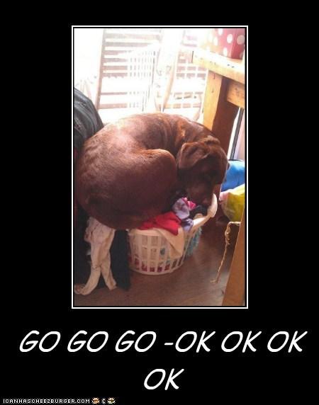 GO GO GO -OK OK OK OK GO OK