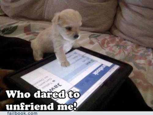 dogs,ipad,unfriending