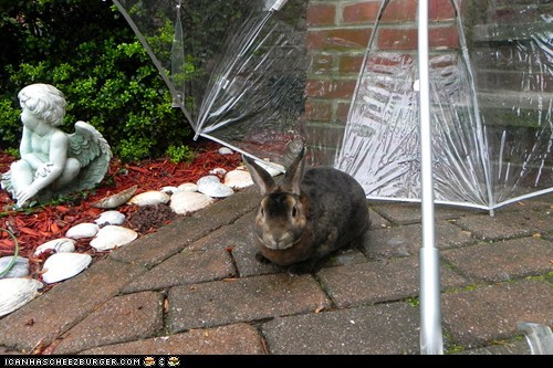 bunny outside rain umbrella - 6213435648