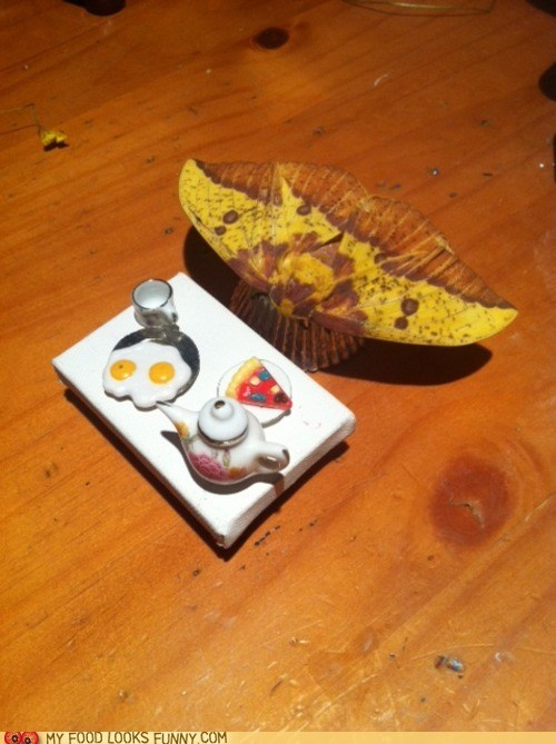 breakfast,fake,miniature,moth