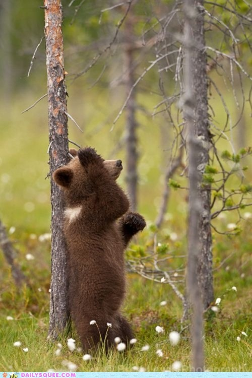 bear,Forest,game,grizzly bear,hide and seek,play