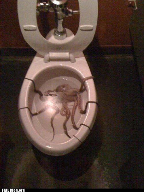 octopus restroom toilet - 6213803776