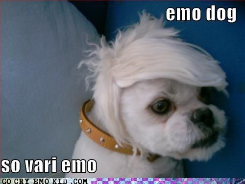 dogs emo hair emolulz - 6213959936
