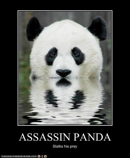 assassin panda prey sneaky stalking swimming water - 6213976576