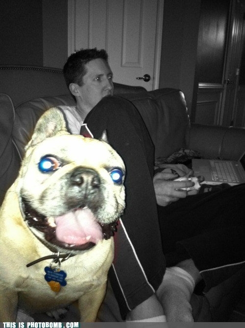 animal Animal Bomb dogs gaming laptop xbox - 6214022144