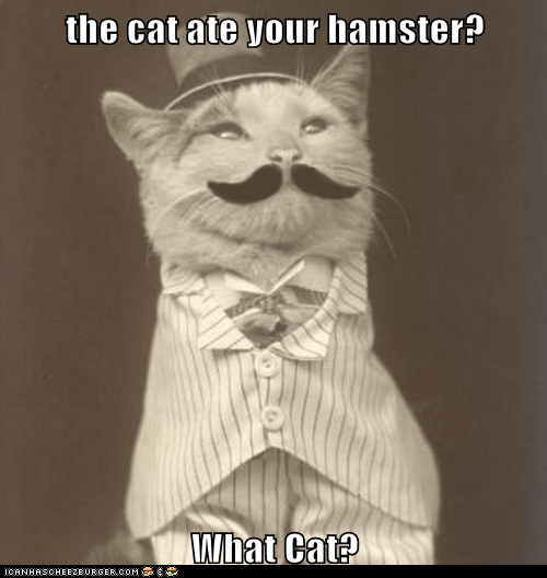 the cat ate your hamster? What Cat?
