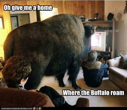 buffalo,confusion,home,home on the range,house,literally,song,watching TV
