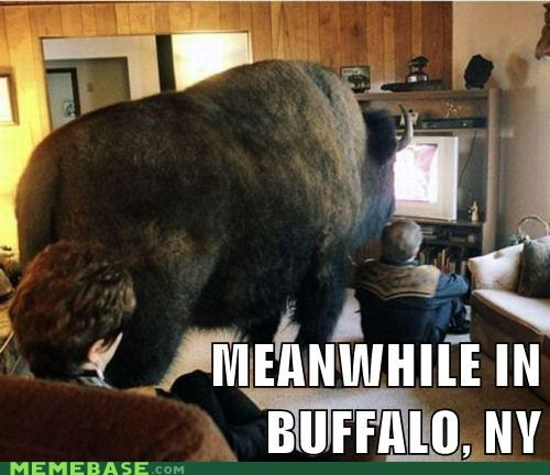 buffalo,Meanwhile,Memes,new york