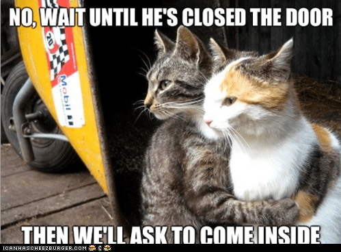 annoying Cats doors in or out inside Memes out restraining restraining cat scumbag - 6214300416