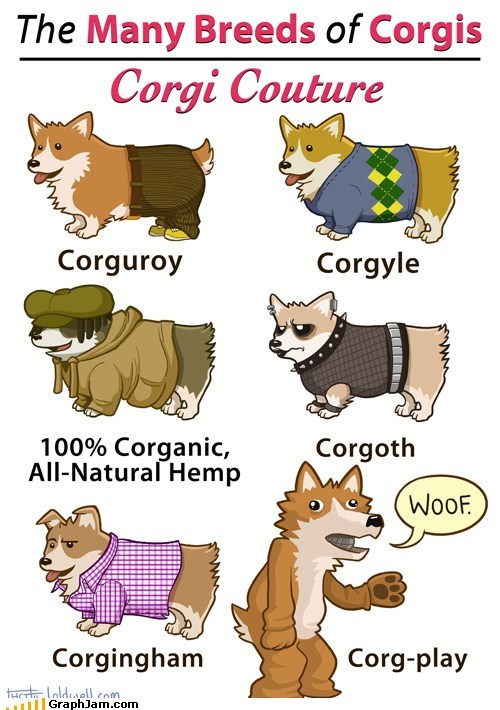 adorable best of week breeds corgi derpy dogs outfits - 6214342400