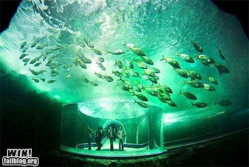 aquarium fish vacation view wincation