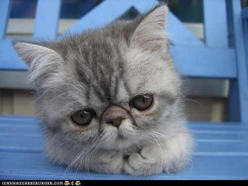 big eyes Cats cyoot kitteh of teh day kitten ron swanson squee - 6214668800