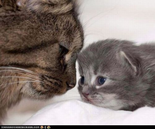 Cats cyoot kitteh of teh day family kitten mama moms mothers day newborns - 6214677248