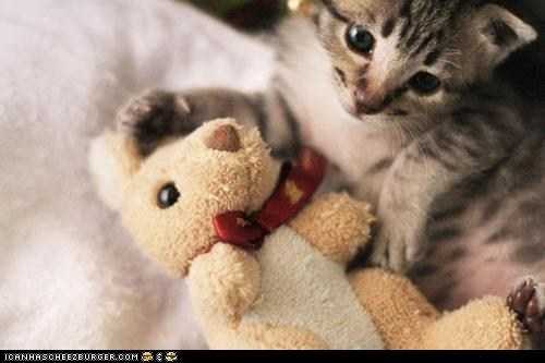 bunny,Cats,cyoot kitteh of teh day,kitten,stuffed animals,toys