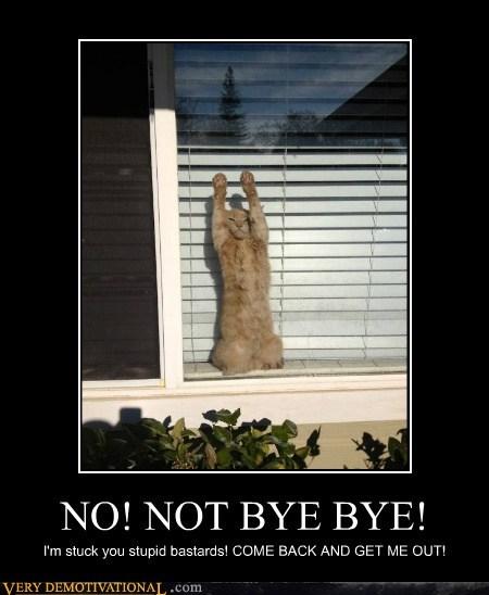 cat hilarious stuck window - 6215336960