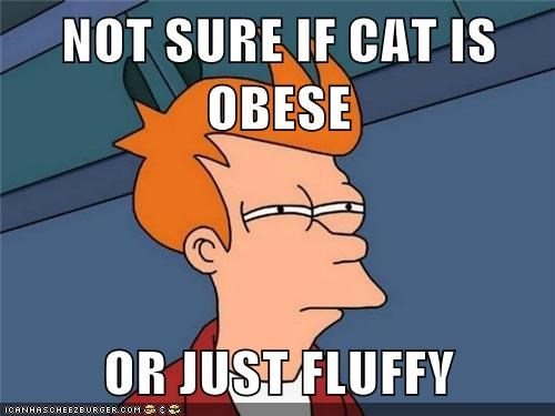 Cats,constantine,fat,Fluffy,fry,obese