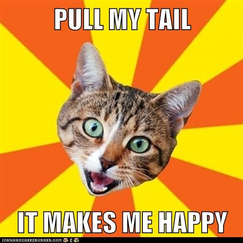 advice,bad advice,Bad Advice Cat,Cats,happy,Memes,pull,tails