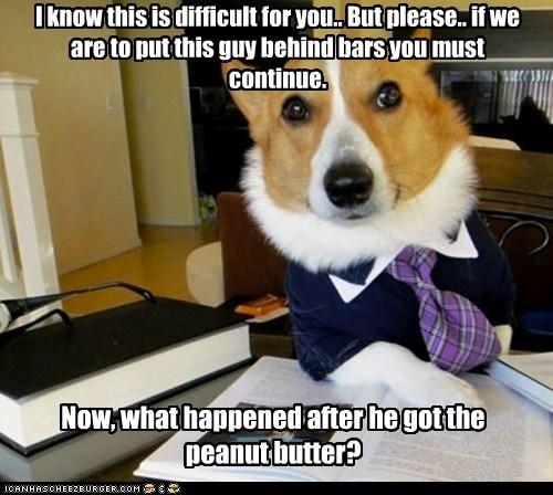 Lawyer Dog - 6215654144