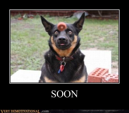 dogs hilarious SOON treat - 6216006912