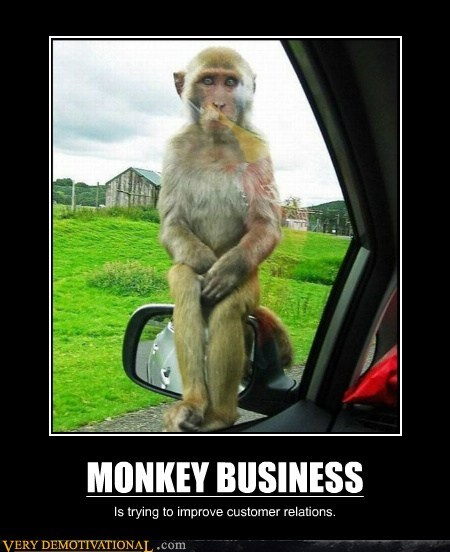 bizarre business hilarious monkey wtf - 6216091136
