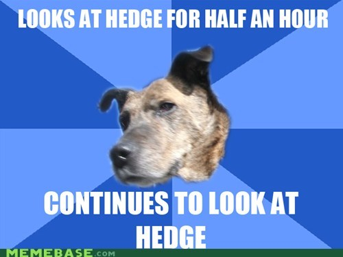 dogs hedge Memes special - 6216538880