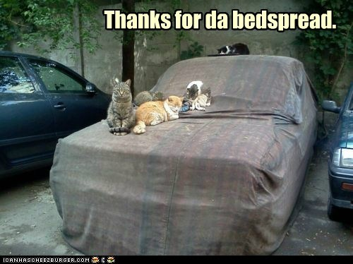 bed bedspread car comfy cover sit sleep