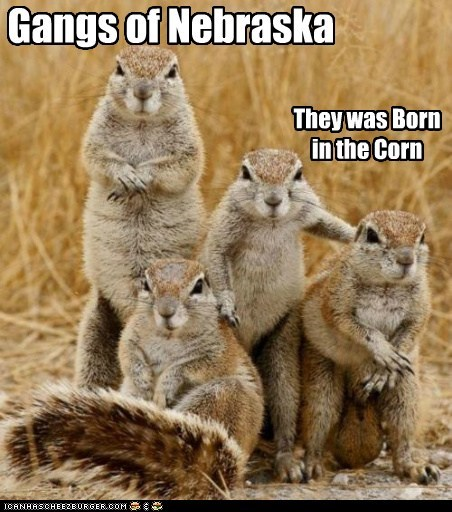 corn,gang,grass,Hall of Fame,nebraska,squirrels