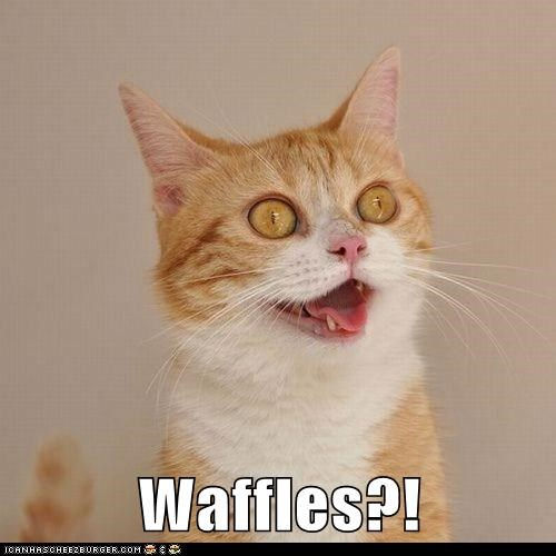 Cats crazy derp excited expressions food hungry lolcats nom waffles yum - 6216709632