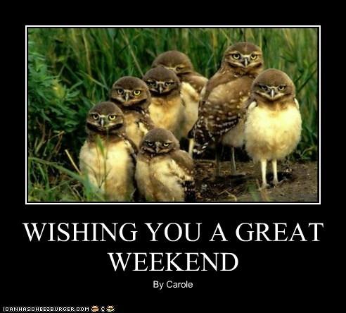 Wishing You A Great Weekend Animal Comedy Animal Comedy Funny