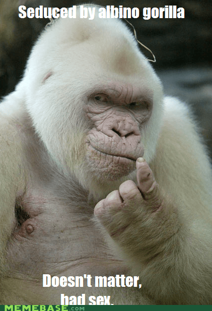 albino animals gorilla had sex Memes putting the best in the b putting the best in the b word - 6216929280
