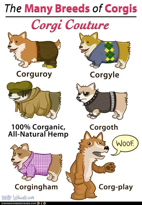 best of the week clothing corgis couture dogs fashion Hall of Fame puns style - 6216938496