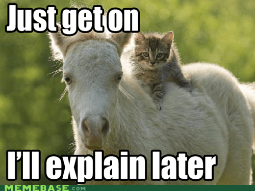 cat,explaining,horse,Memes,no time to explain