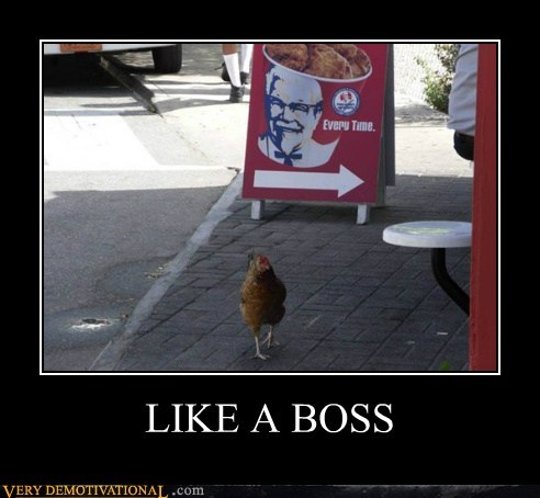 chicken,hilarious,kfc,Like a Boss