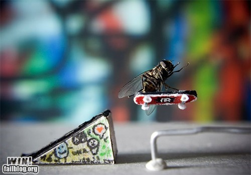 fly radical skateboard sports whee