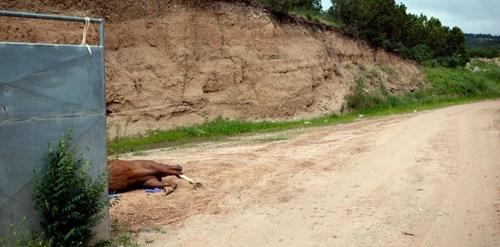 breakdown Horse Racing weekend read - 6217647360