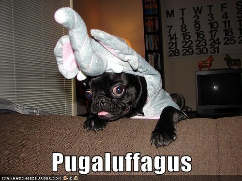 best of the week costume dogs elephant elephants Hall of Fame portmanteaus pug pugs snuffleupagus
