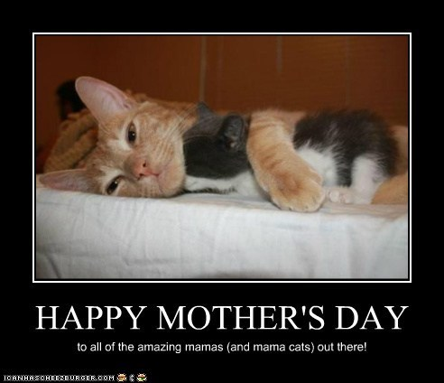 Cats,cuddling,cute,holidays,kitten,lolcats,mom,moms,mothers day
