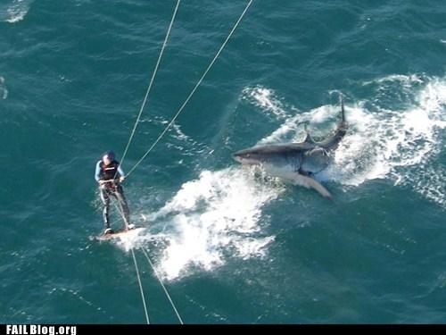 ocean shark water skiing