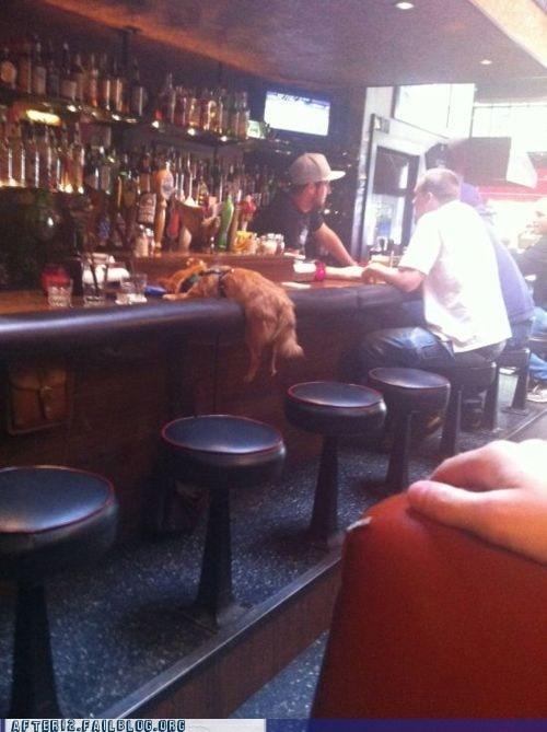 bar,barstool,crunk critters,dogs,martini