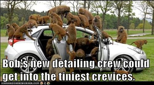 car,cleaning,detailed,family,group,monkeys,service