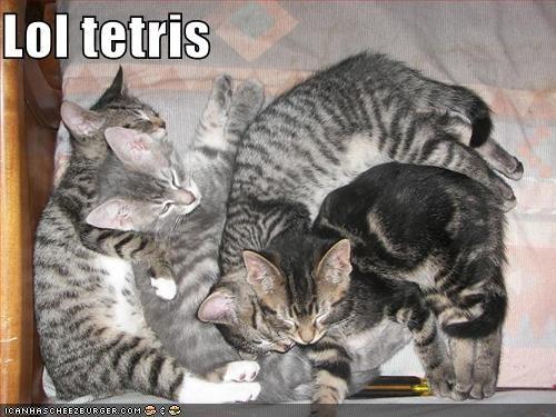 kitten lolcats lolkittehs tetris video games - 621832448