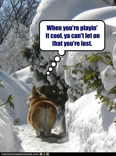 corgi dogs play it cool snow walk away - 6218400256
